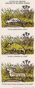 First panel features a confused mountain lion in a field looking down at a possum lying on it's back. Second panel features a mountain lion looking at chameleon in camouflage. Last panel features a mountain lion looking at the upper half of a corgi dog poking out of the grass.